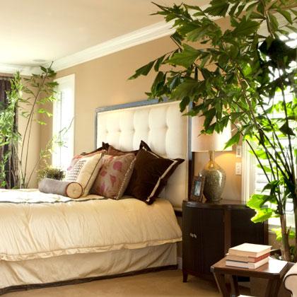 indoor_plants_3