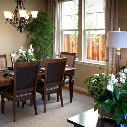 indoor_plants_4